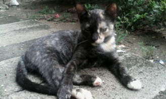 Misi wandered up to the clinic one day during a rainstorm and found a new home.