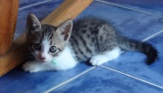 """Little Leo is growing up fast! He's our critter catcher. He is named after Lionel """"Leo"""" Messi, an Argentine soccer player."""