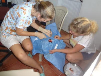 Elisabeth sewing up a cut foot.