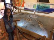 En el Museo Paleontólogico
